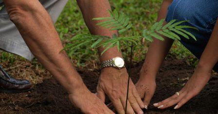 В столице молодые родители смогут поучаствовать в акции «Наше дерево»/Fotobank